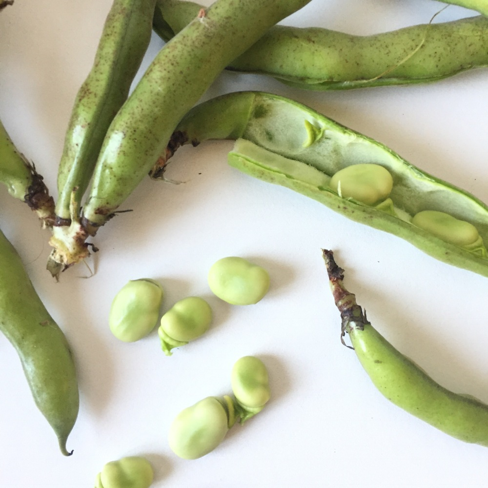 Les fèves / On mange quoi au printemps ? - Copyright © Le Revers de La Manche
